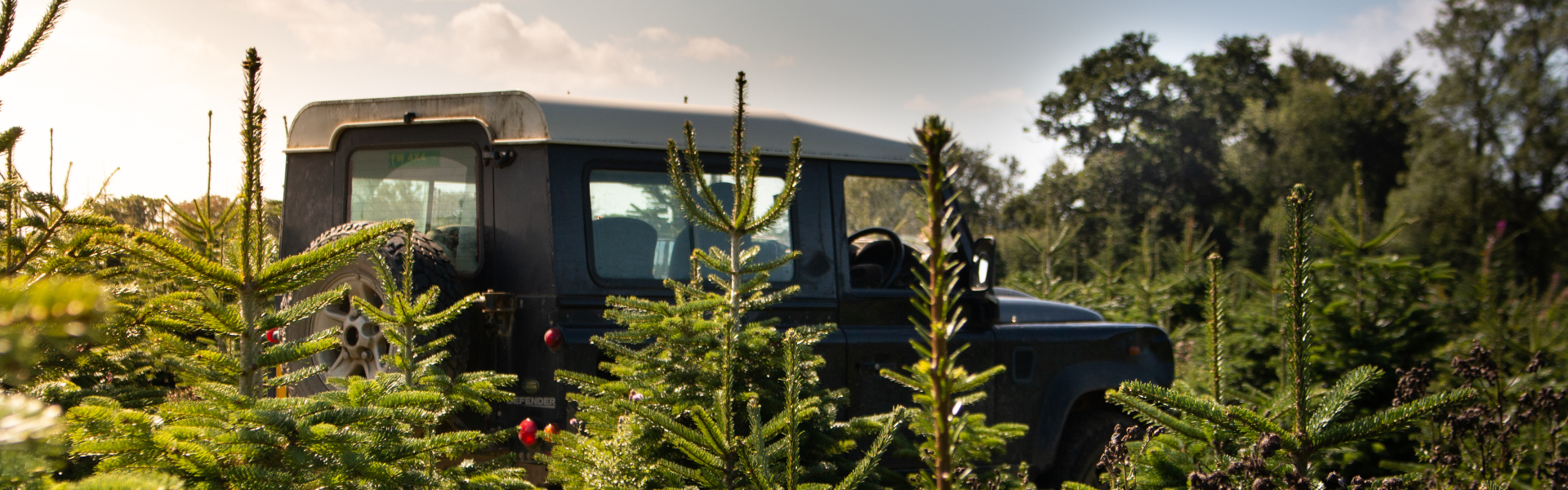 Land Rover amongst the Christmas Trees
